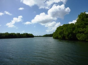 Huge mangrove swamp 2