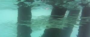 Snorkelling 3