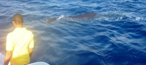 Whale 10