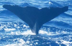 Whale 8