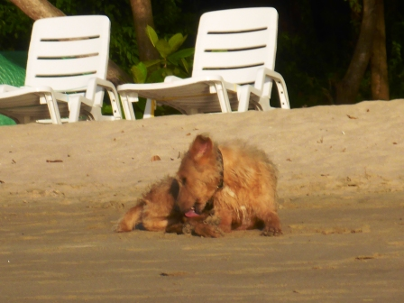 Bequia bobbing beach dog