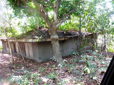 Jungle reclaiming abandoned houses 5