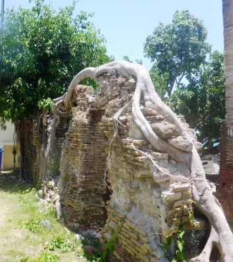 Tree embedded in ruins