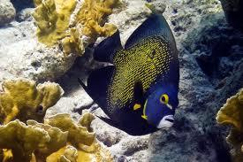 Dive 4