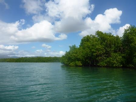 Inside the mangroves