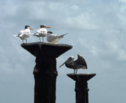 Bird stop 1