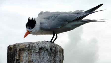 Bird stop 4