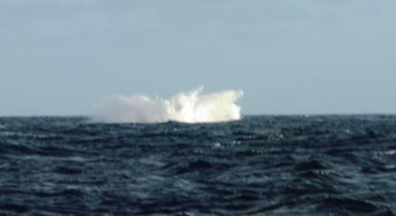 Whale fun 2