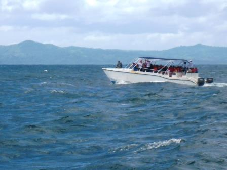 Whale watching trips