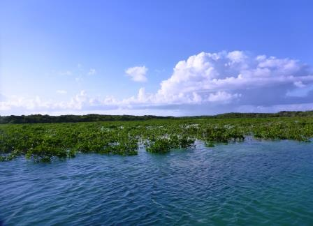 High tide in the mangroves