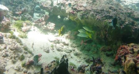 Snorkelling 2