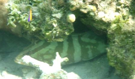 Snorkelling O'Briens