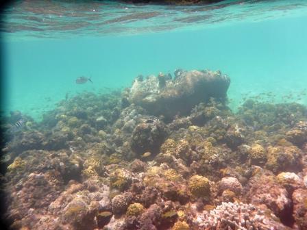 Snorkelling Warderick
