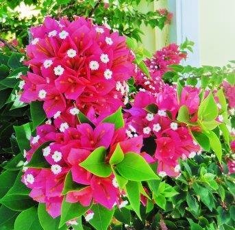 Flowers everywhere 2