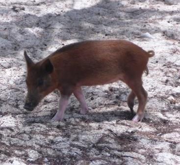Piggyville 4
