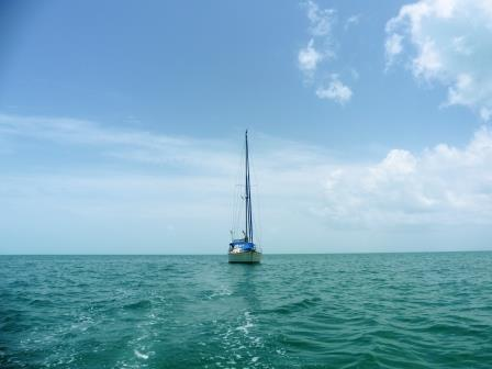Morphie on her own in Great Sail Cay