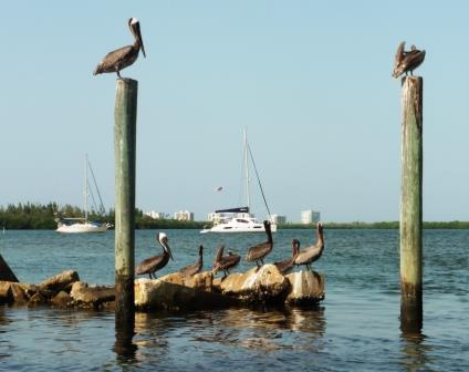 Pelicans in front of the anchorage