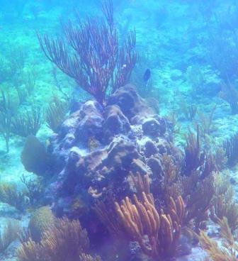 Snorkelling 5