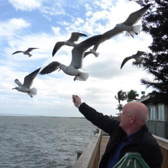 Feeding the birds on the ICW