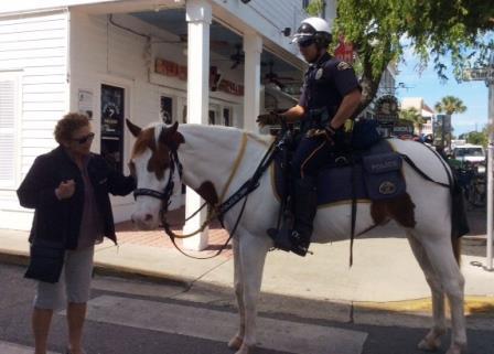 Making new friends in Key West