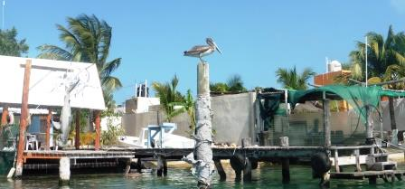 Fishing village with pelican