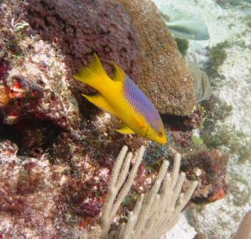 Reef dive 1
