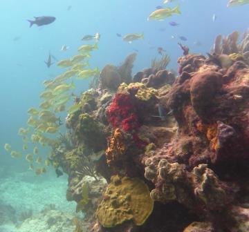 Reef dive 2