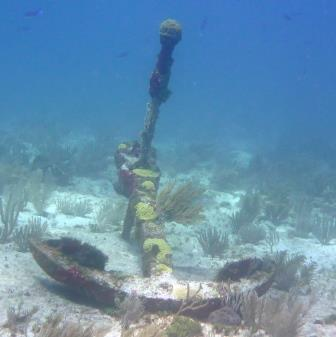 Reef dive 3