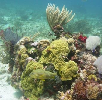 Reef dive 5