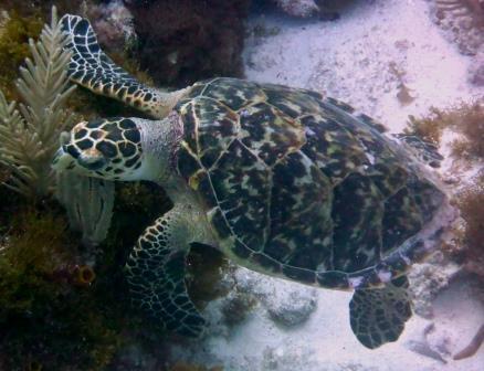 Reef dive 6