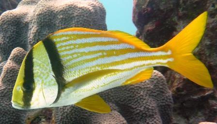 Reef dive 7