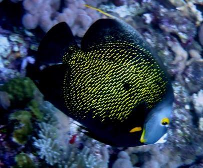 Reef dive 8