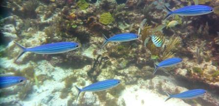 Reef dive 9