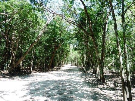 Coba pathway