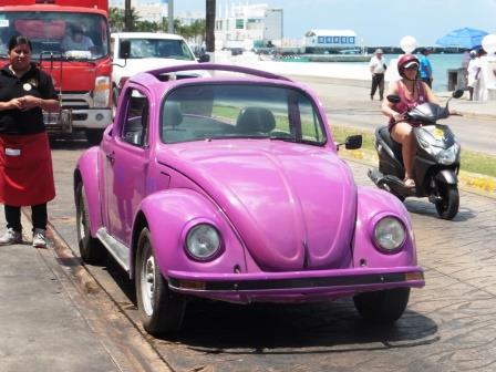 Cozumel beetle