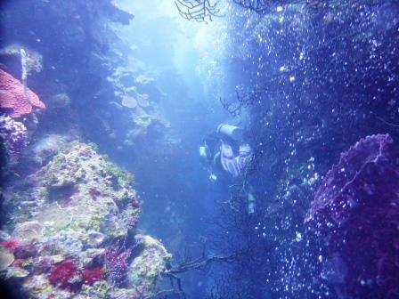 2 Dive 1