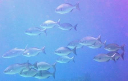 3 Dive 9