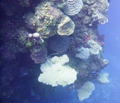 4 Dive 7