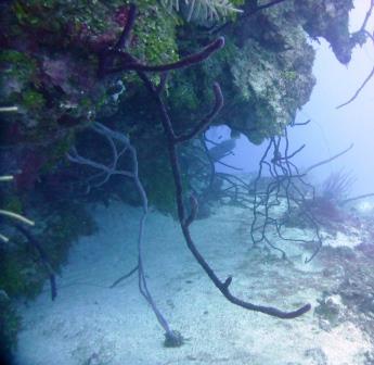 4 Dive 8