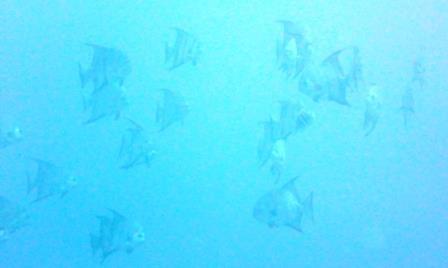 Dive 1 4