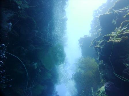 Dive 4 4