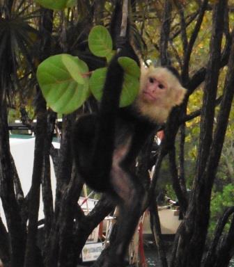 Monkey business 2