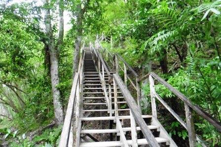 Tikal 8