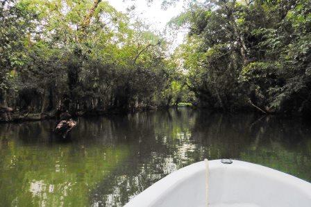 into-the-mangroves