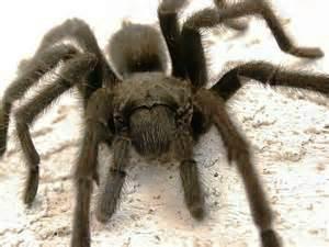 spider-alert